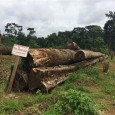 "Greenpeace | 4 October 2016 http://farmlandgrab.org/26570 244 Cameroonian farmers bring SGSOC palm oil plantation to justice Local communities affected by a large-scale palm oil plantation took their case to the <a href=""http://worldfamilyonline.org/244-cameroonian-farmers-bring-sgsoc-palm-oil-plantation-to-justice/#more-'"" class=""more-link"">more »</a>"